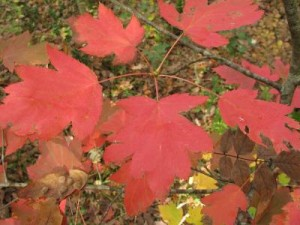 autunno a Corviano