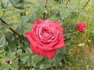 Valle delle Rose (2)