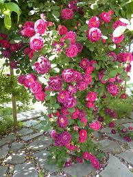 Valle delle Rose (4)