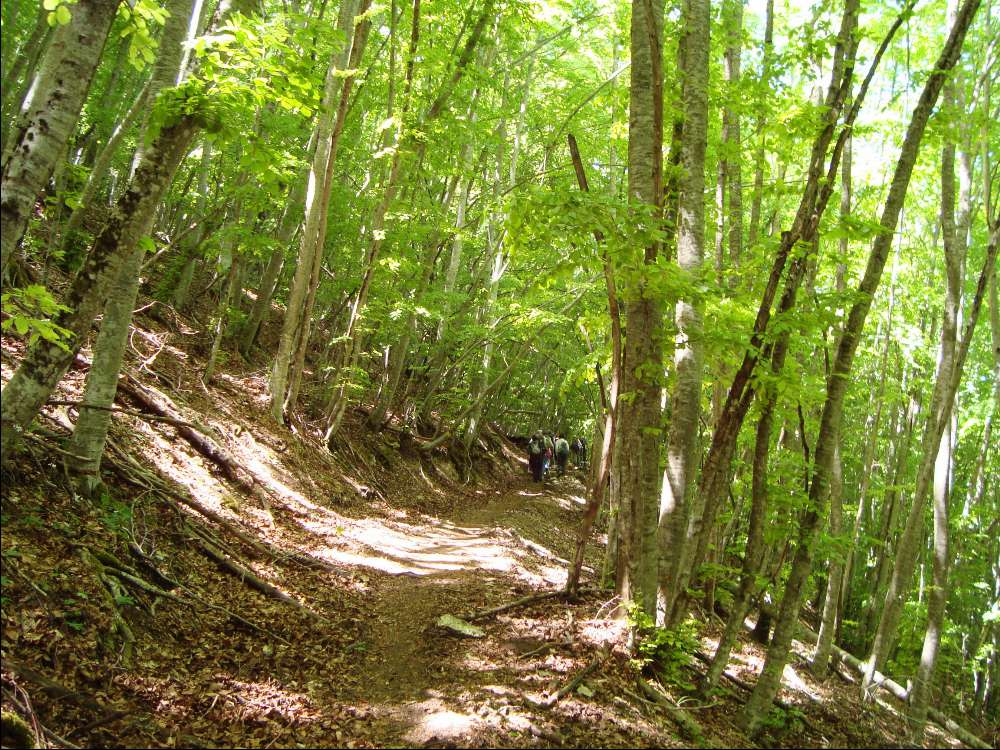 CANCELLATA Escursioni natura e cultura