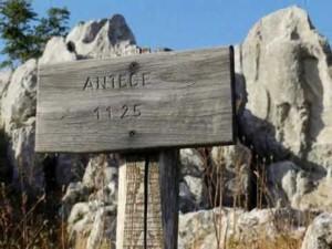 ANTECE (2)