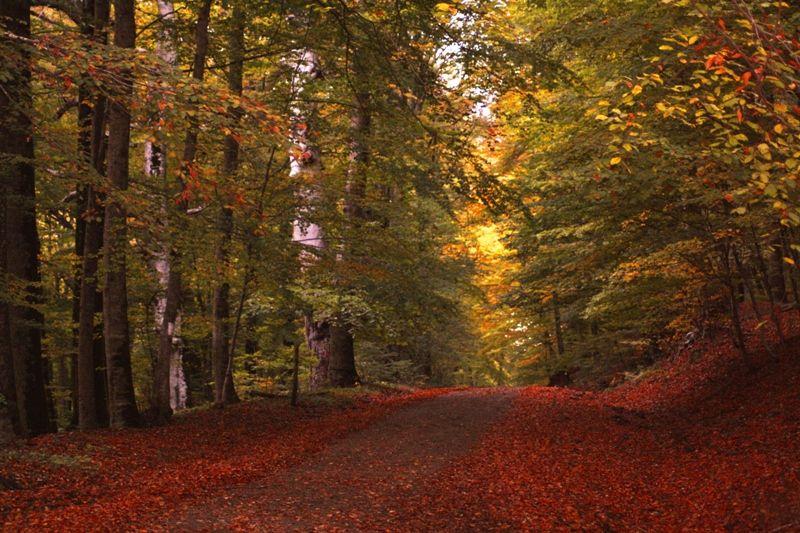 DOMENICA 1/11- Escursione – LA VIA FRANCIGENA DEL FOGLIANO NEL LAGO DI VICO (VT)