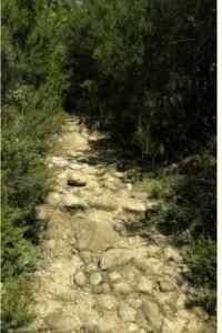 Monti Tolfa (3)